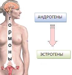 андрогены эстрогены