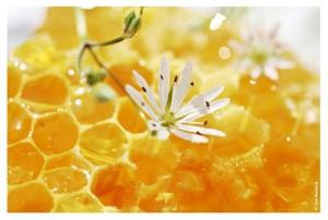 мед при диабете можно ли